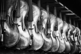 black and white violin row